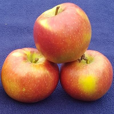 cabaret apple