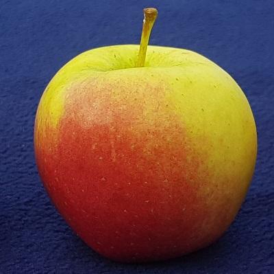 maribell apple, lola