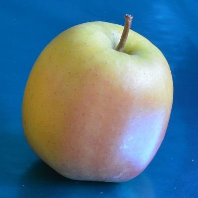 tentation apple