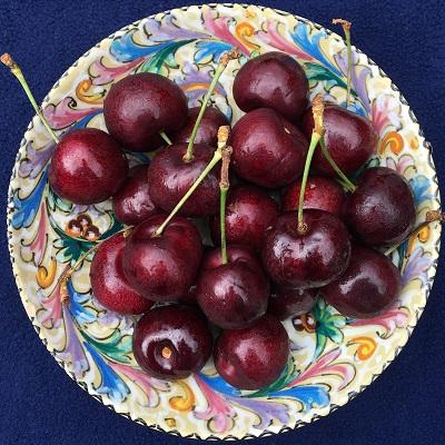 sentennial cherry
