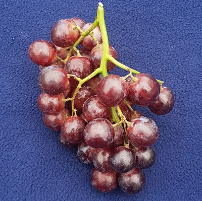 tawny red seedless grape