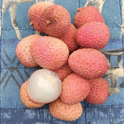 Mauritius lychee