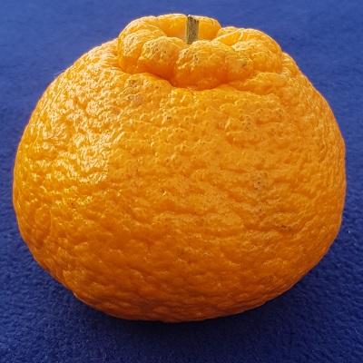 banzzai, mandarin, easy-peeler