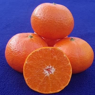 leanri, easy peeler, mandarin