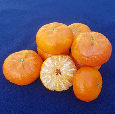 satsuma queen spain