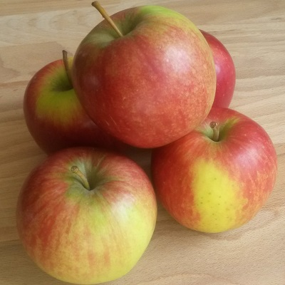 cripps red_sundowner_apple