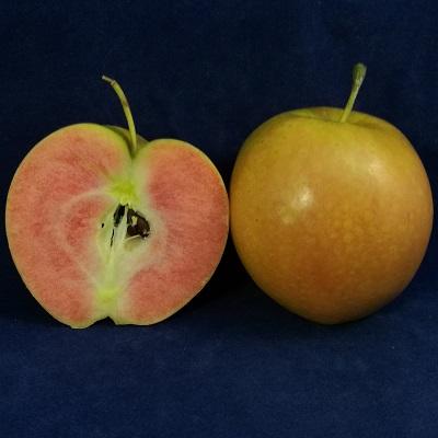 Kissabel apple