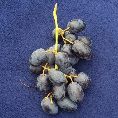 black grape, arra 14-1, mystic bllom