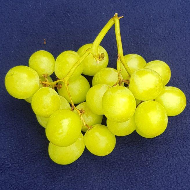 grape Ivory