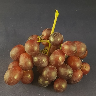 queen ruby grape