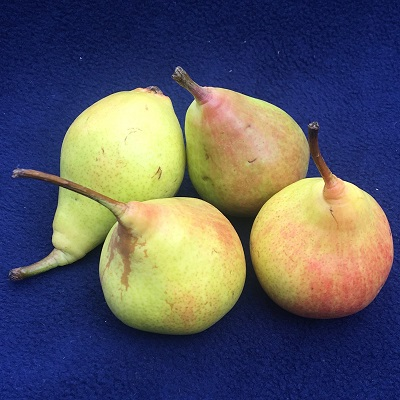 morettini pear