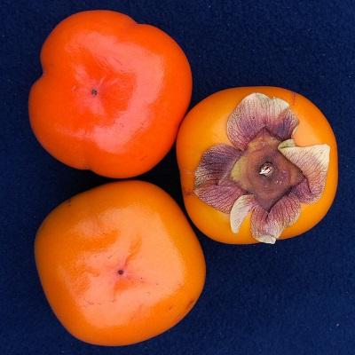 triumph persimmon