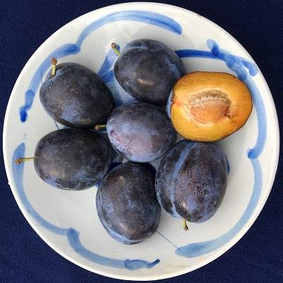 haganta european plum