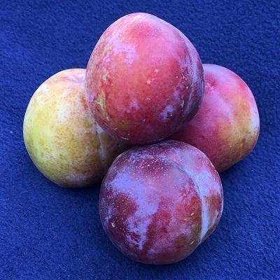 reeves plum
